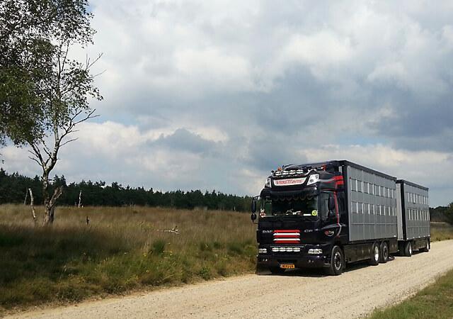 Vakkundig transport voor vee
